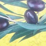olive-disegno