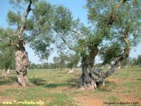 ulivi-turismosostenibile